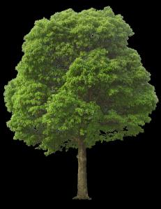木,バウムテスト