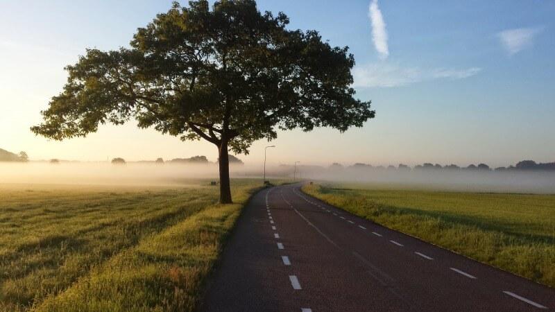 木と道の画像